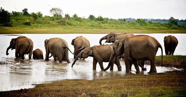 スリランカでゾウを見る