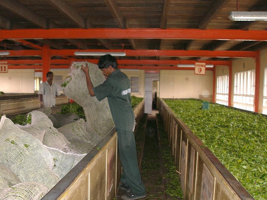 紅茶の工場